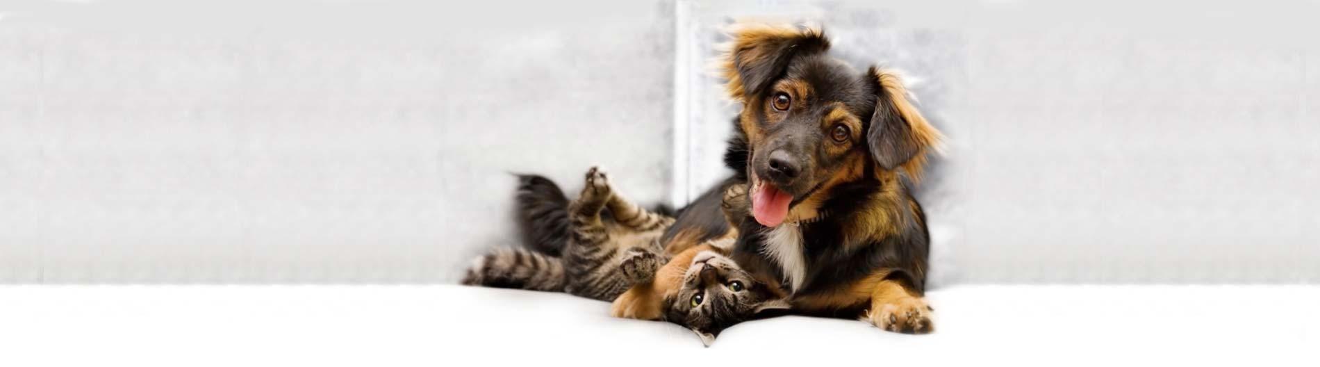 viagen-pets-dog and cat cloning