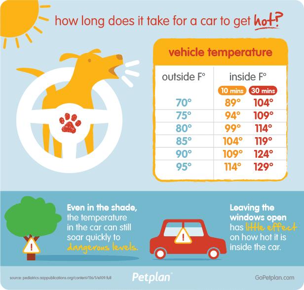 pets and hot car temperatures